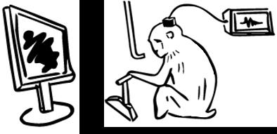 提示画像の比較によるワーキングメモリの実験