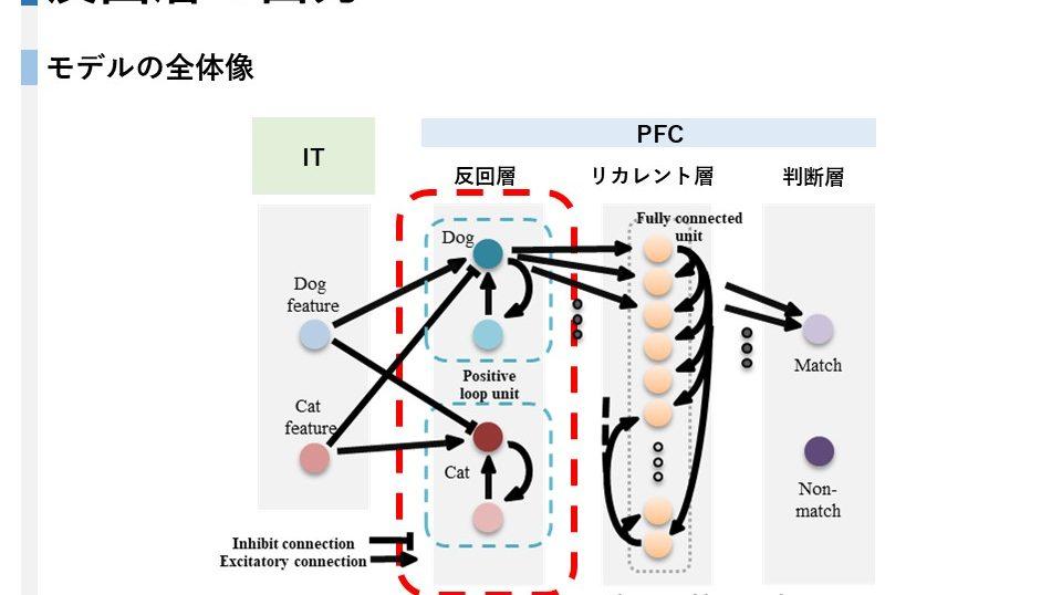 ワーキングメモリ ニューラルネットワーク シミュレーション